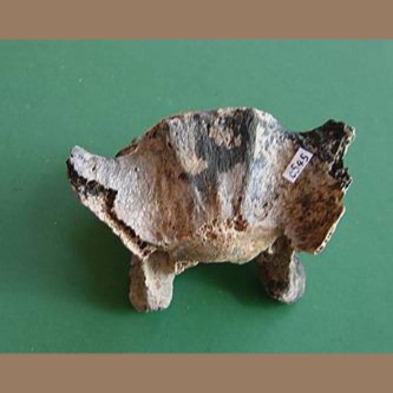 Jaguar Vertebra Fossil | Fossils & Artifacts for Sale | Paleo Enterprises | Fossils & Artifacts for Sale