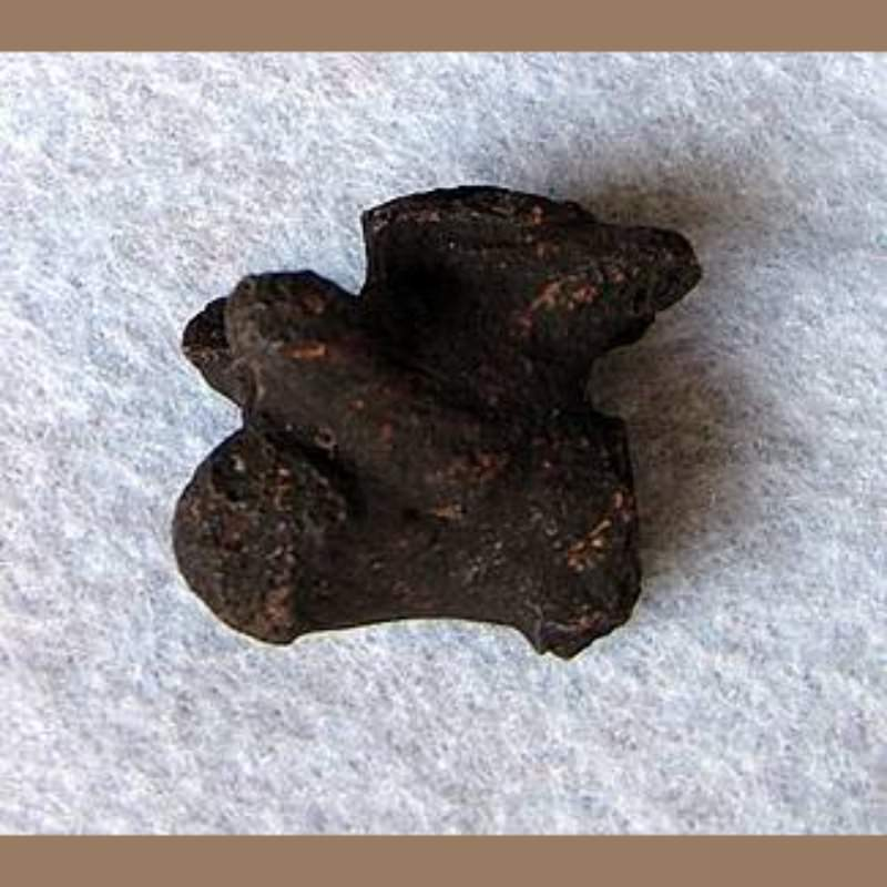 Snapping TurtleFossil | Fossils & Artifacts for Sale | Paleo Enterprises | Fossils & Artifacts for Sale