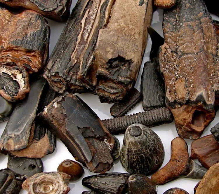 Bulk Fossils