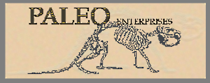 Fossils & Artifacts for Sale | Paleo Enterprises