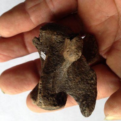 Mammoth Tail Vert