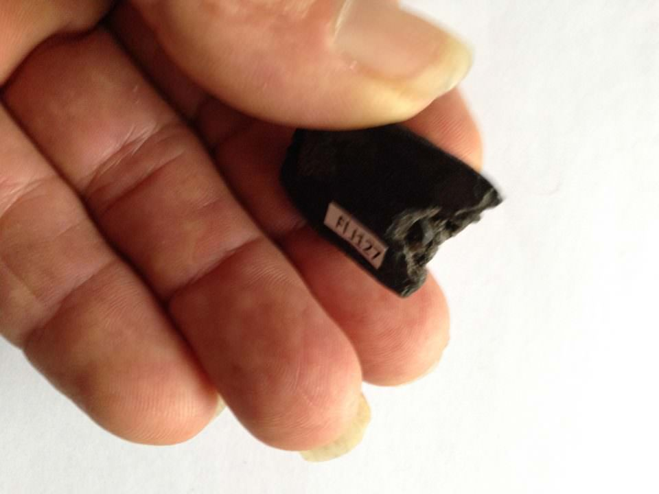 Part of Fossil Baby Mammoth Tooth | Fossils & Artifacts for Sale | Paleo Enterprises | Fossils & Artifacts for Sale
