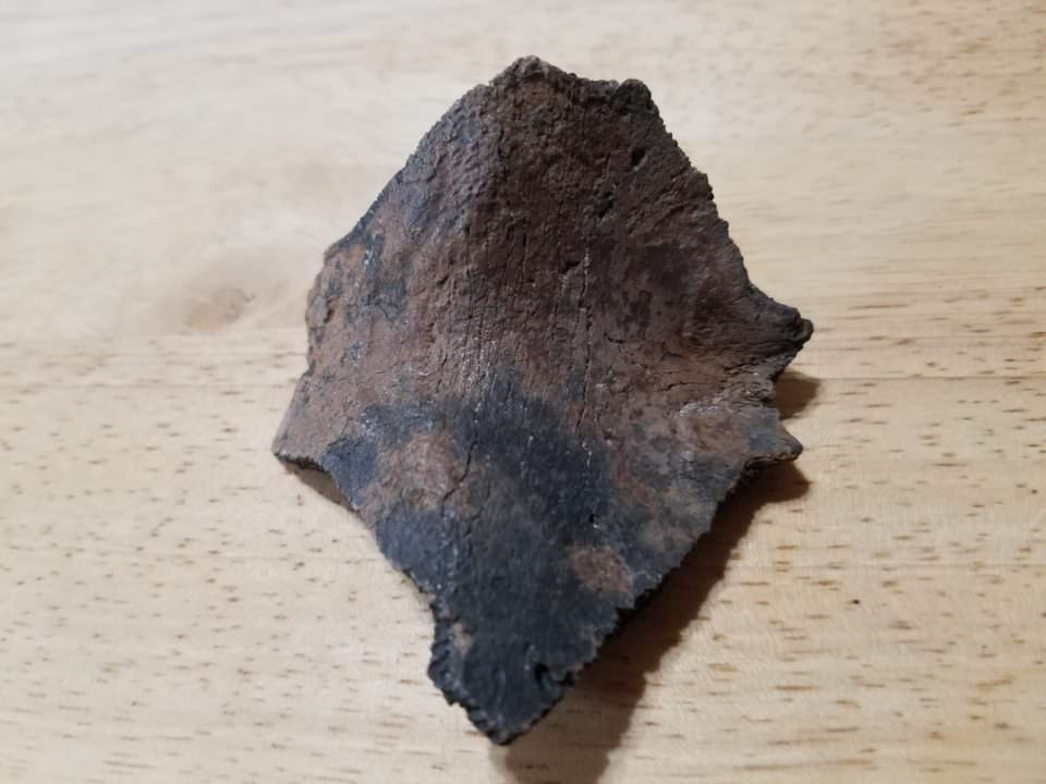 Turtle Shell Fossil | Fossils & Artifacts for Sale | Paleo Enterprises | Fossils & Artifacts for Sale