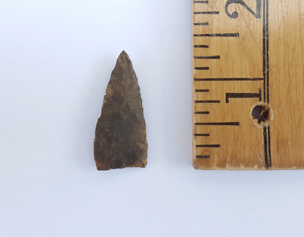 Fl. Pinellas type arrowhead w/COA! | Fossils & Artifacts for Sale | Paleo Enterprises | Fossils & Artifacts for Sale