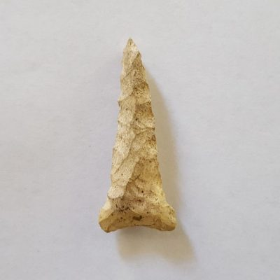 Fl. Wheeler type Arrowhead
