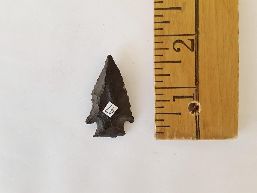 Fl. Bolen Plain type arrowhead, AGATIZED CORAL! | Fossils & Artifacts for Sale | Paleo Enterprises | Fossils & Artifacts for Sale