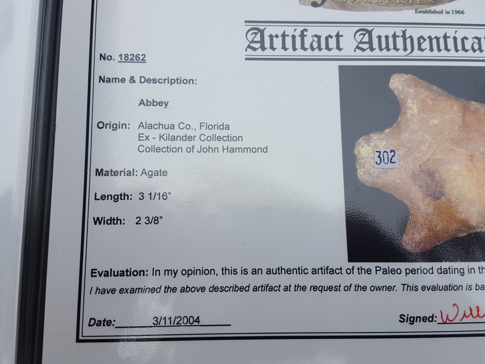Fl. Abbey type arrowhead, RARE PALEO with COA! | Fossils & Artifacts for Sale | Paleo Enterprises | Fossils & Artifacts for Sale