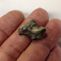 Saber Cat Partial Molar Smilodon | Fossils & Artifacts for Sale | Paleo Enterprises | Fossils & Artifacts for Sale