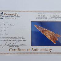 Fl. Hernando type arrowhead, agatized coral w/ COA!   Fossils & Artifacts for Sale   Paleo Enterprises   Fossils & Artifacts for Sale
