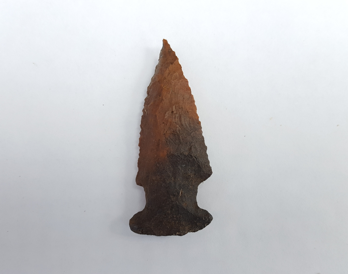 Fl. Bolen Bevel type arrowhead w/COA. | Fossils & Artifacts for Sale | Paleo Enterprises | Fossils & Artifacts for Sale