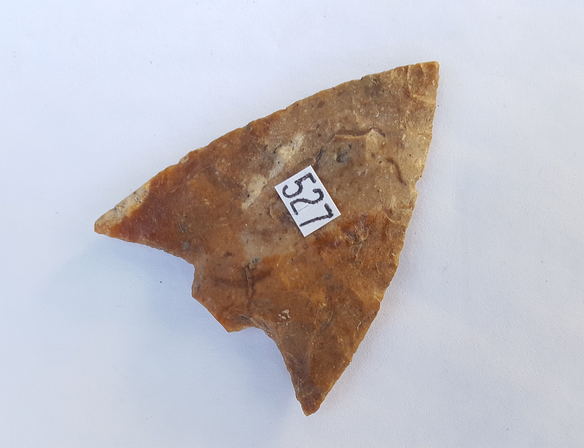 Fl. Hillsborough type arrowhead, PAPER THIN W/COA! | Fossils & Artifacts for Sale | Paleo Enterprises | Fossils & Artifacts for Sale