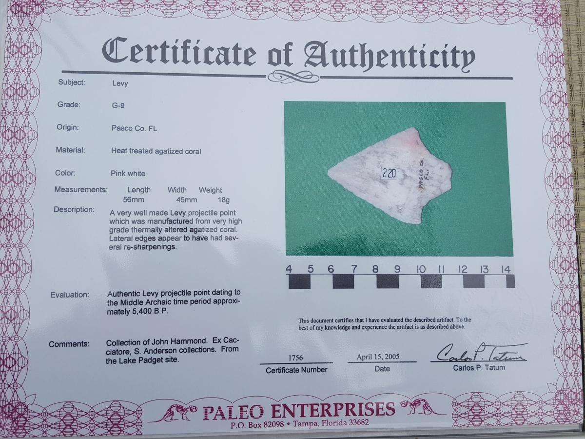 Fl. Levy type arrowhead w/COA, COLORFUL CORAL!   Fossils & Artifacts for Sale   Paleo Enterprises   Fossils & Artifacts for Sale