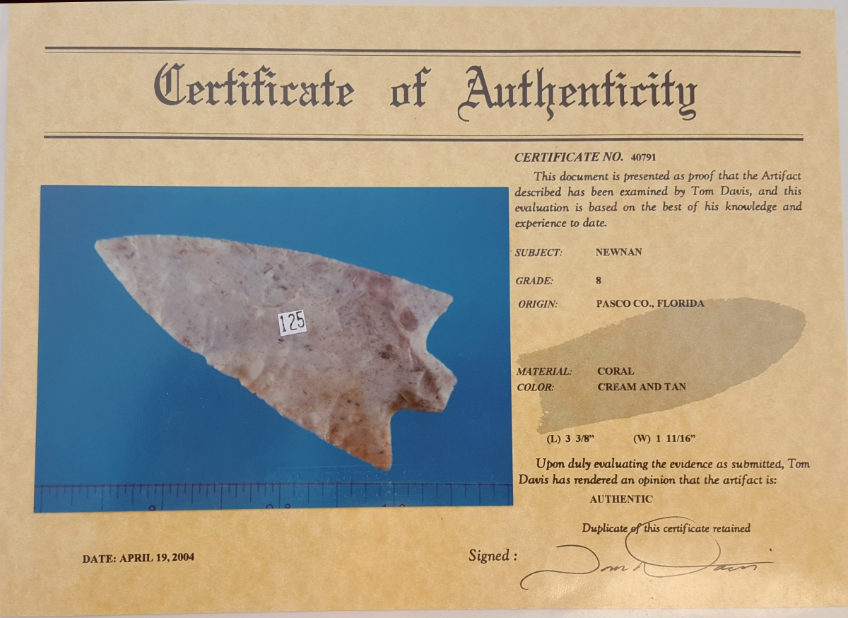 Fl. Newnan type arrowhead, CORAL G8 w/COA!   Fossils & Artifacts for Sale   Paleo Enterprises   Fossils & Artifacts for Sale