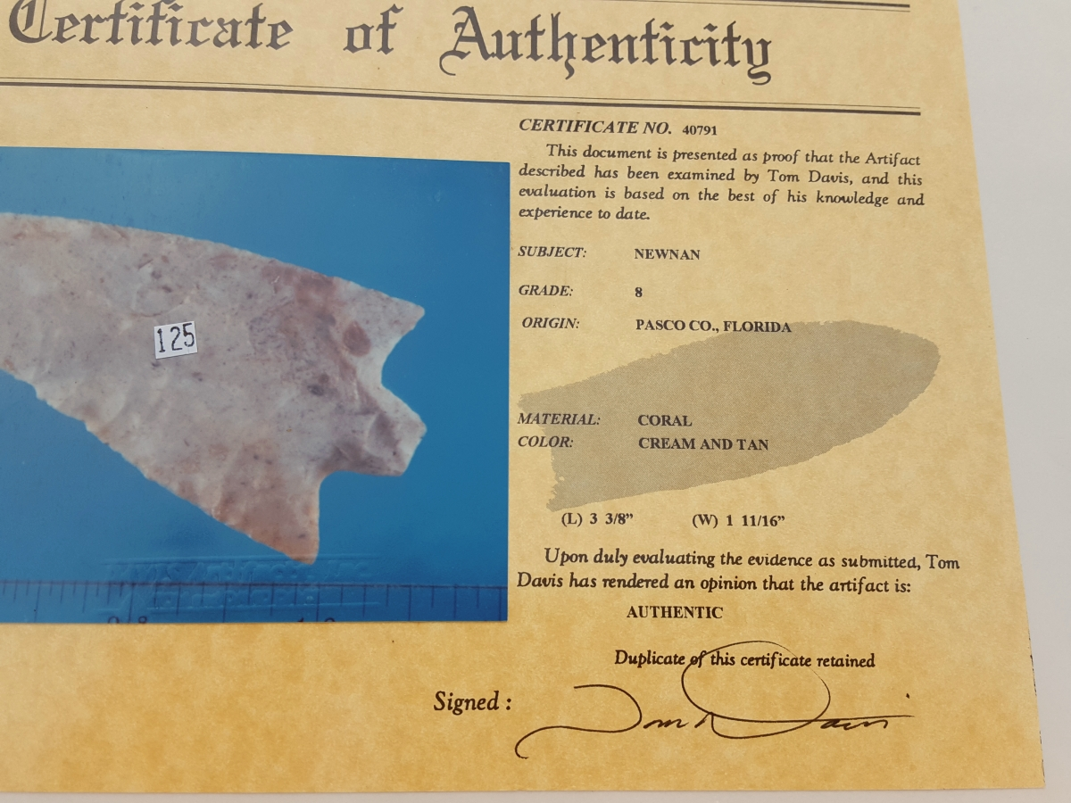 Fl. Newnan type arrowhead, CORAL G8 w/COA! | Fossils & Artifacts for Sale | Paleo Enterprises | Fossils & Artifacts for Sale
