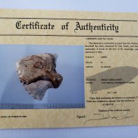 Fl. Abbey type point w/COA! | Fossils & Artifacts for Sale | Paleo Enterprises | Fossils & Artifacts for Sale