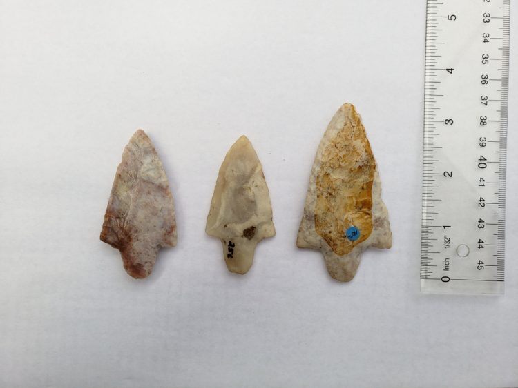 Group of 3 Florida Marion points w/COA! | Fossils & Artifacts for Sale | Paleo Enterprises | Fossils & Artifacts for Sale