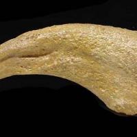 "Dromaeosaur (""Raptor"") Dinosaur Killing Claw (Copy) | Fossils & Artifacts for Sale | Paleo Enterprises | Fossils & Artifacts for Sale"