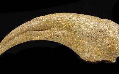 "Dromaeosaur (""Raptor"") Dinosaur Killing Claw (Copy)"