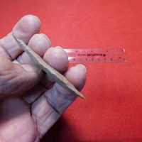 Quad Paleo Insight COA | Fossils & Artifacts for Sale | Paleo Enterprises | Fossils & Artifacts for Sale