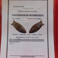 BEAVER LAKE INSIGHT COA | Fossils & Artifacts for Sale | Paleo Enterprises | Fossils & Artifacts for Sale