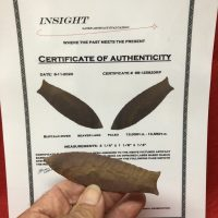 Beaver Lake - Projectile Point COA | Fossils & Artifacts for Sale | Paleo Enterprises | Fossils & Artifacts for Sale