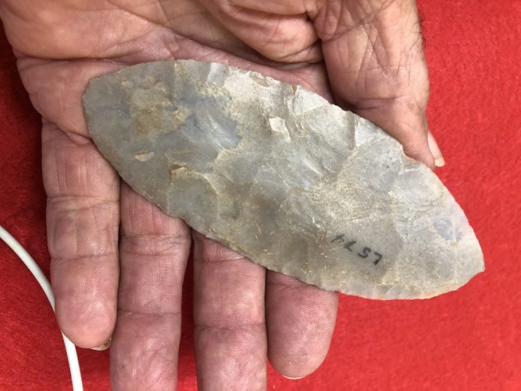 Large Very Thin Caddoan Texas Blade | Fossils & Artifacts for Sale | Paleo Enterprises | Fossils & Artifacts for Sale