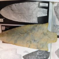 Very Large Coral Newnan Waiting on Cert. | Fossils & Artifacts for Sale | Paleo Enterprises | Fossils & Artifacts for Sale