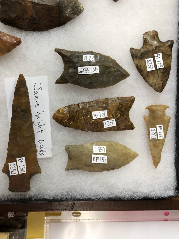Bolen Bevel These will be listed soon | Fossils & Artifacts for Sale | Paleo Enterprises | Fossils & Artifacts for Sale