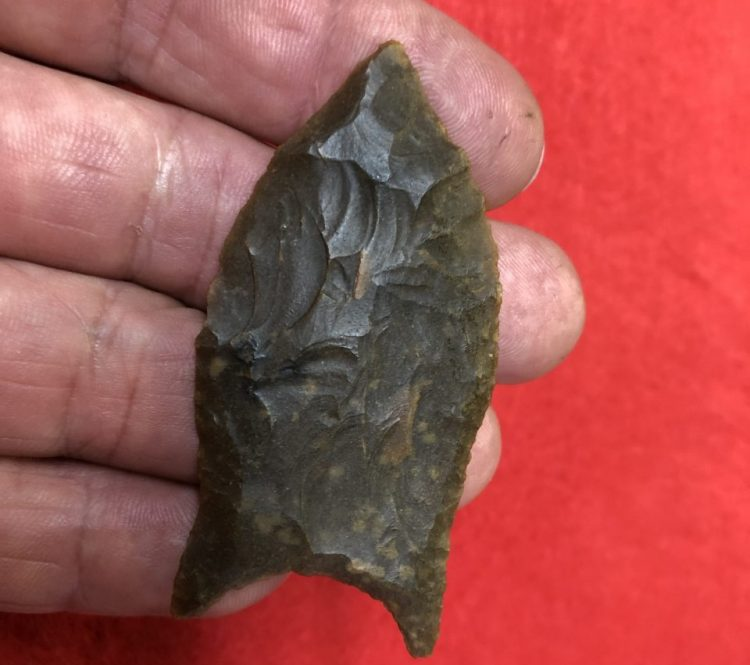 Great Paleo Simpson Florida | Fossils & Artifacts for Sale | Paleo Enterprises | Fossils & Artifacts for Sale