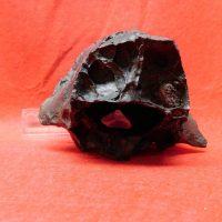 Giant Armadillo Partial Skull Florida | Fossils & Artifacts for Sale | Paleo Enterprises | Fossils & Artifacts for Sale