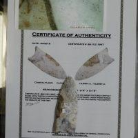 Clovis COA Coastal Plains | Fossils & Artifacts for Sale | Paleo Enterprises | Fossils & Artifacts for Sale