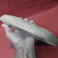 Big Fish Fossil   Fossils & Artifacts for Sale   Paleo Enterprises   Fossils & Artifacts for Sale