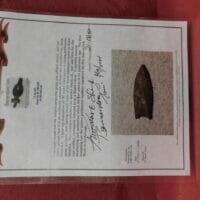 Clovis  BT COA | Fossils & Artifacts for Sale | Paleo Enterprises | Fossils & Artifacts for Sale
