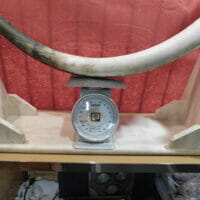 Complete Fossil Mastodon Tusk   Fossils & Artifacts for Sale   Paleo Enterprises   Fossils & Artifacts for Sale