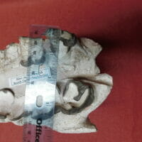 Fossil Rhino Jaw Fossil Teeth | Fossils & Artifacts for Sale | Paleo Enterprises | Fossils & Artifacts for Sale