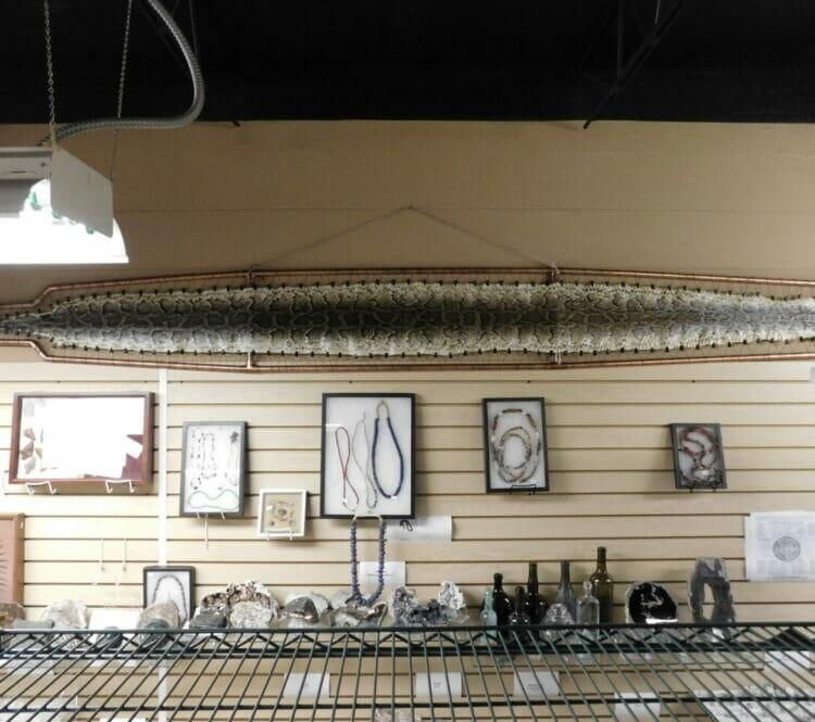 We Do Snake Skins 10' | Fossils & Artifacts for Sale | Paleo Enterprises | Fossils & Artifacts for Sale