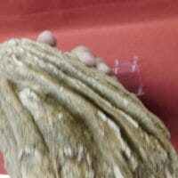 Wooly Mammoth Tooth Fossil Hardee Co Fl. | Fossils & Artifacts for Sale | Paleo Enterprises | Fossils & Artifacts for Sale