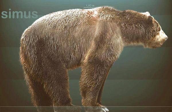 Bear Fossils