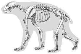 Arctodus-skeleton
