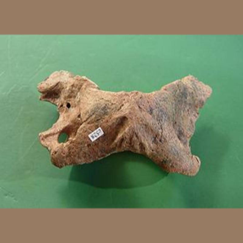 Smilodon Fatalis Atlas Fossil | Fossils & Artifacts for Sale | Paleo Enterprises | Fossils & Artifacts for Sale