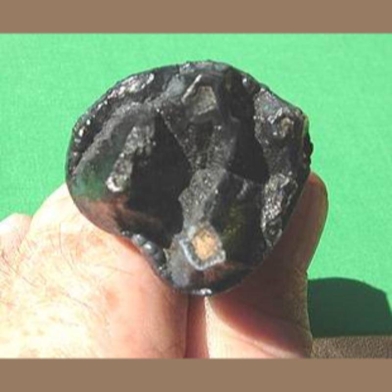 Baby Mastodon Molar Fossil   Fossils & Artifacts for Sale   Paleo Enterprises   Fossils & Artifacts for Sale