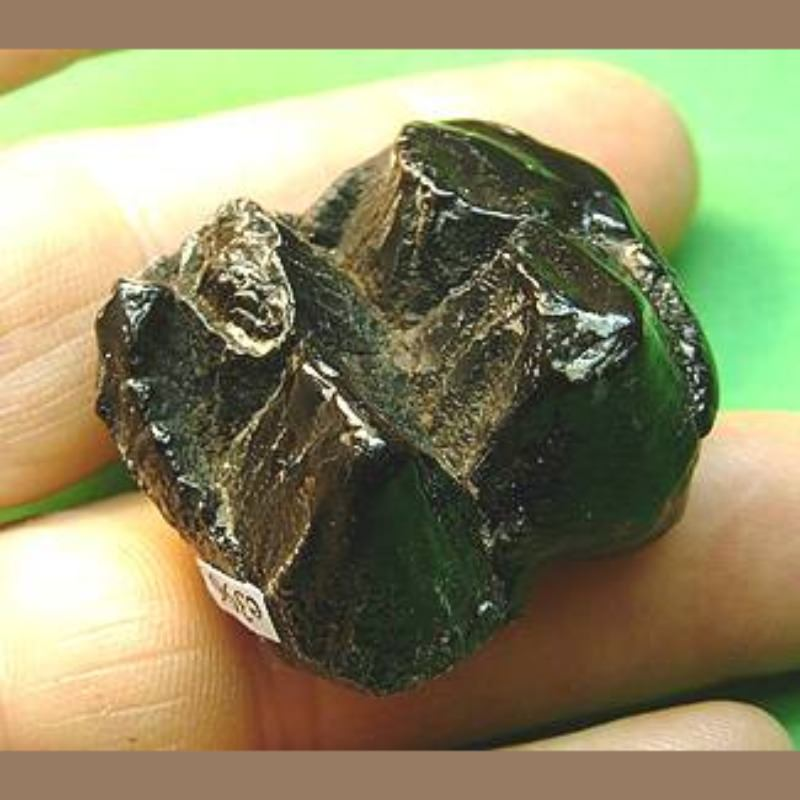 Baby Mastodon Molar Fossil | Fossils & Artifacts for Sale | Paleo Enterprises | Fossils & Artifacts for Sale