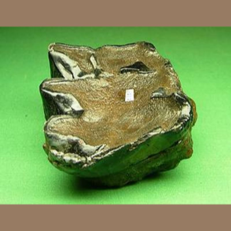 Mastodon Tooth Fossil | Fossils & Artifacts for Sale | Paleo Enterprises | Fossils & Artifacts for Sale