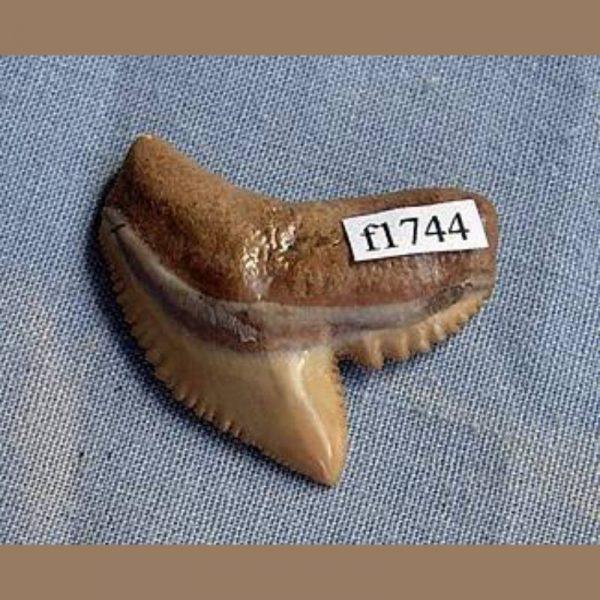 f1744a