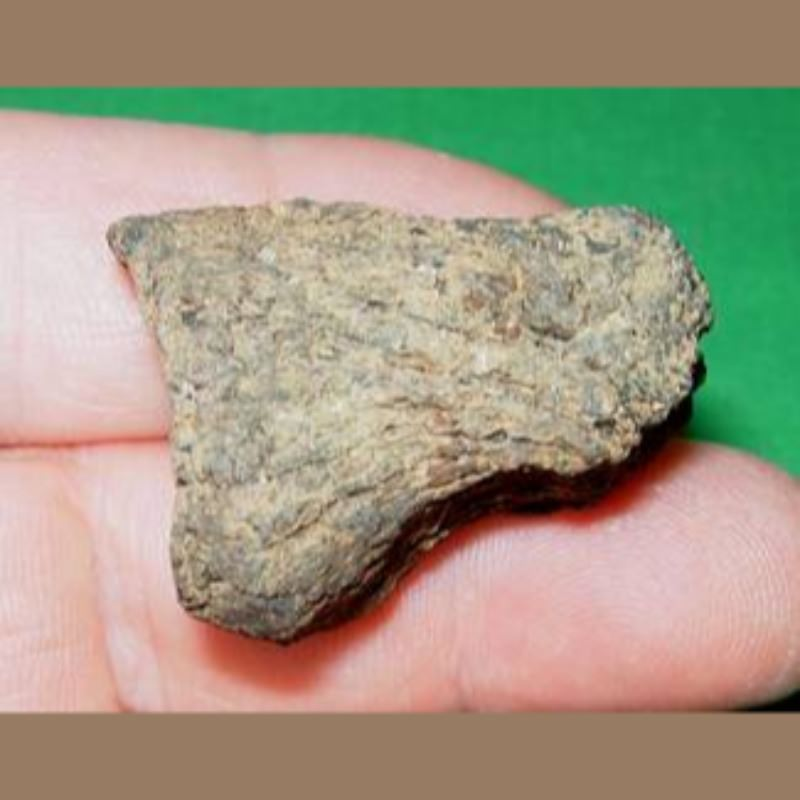 Sloth Phalange Likely Megalonyx Fossil | Fossils & Artifacts for Sale | Paleo Enterprises | Fossils & Artifacts for Sale
